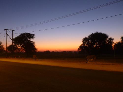 ボツワナはアフリカで大好きになった国 (13)