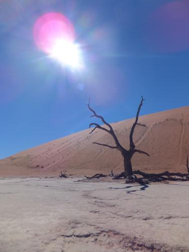 ナミビアナミブ砂漠1 (9)
