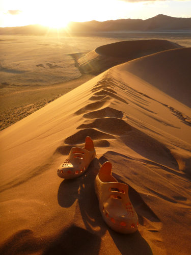ナミビアナミブ砂漠2 (11)