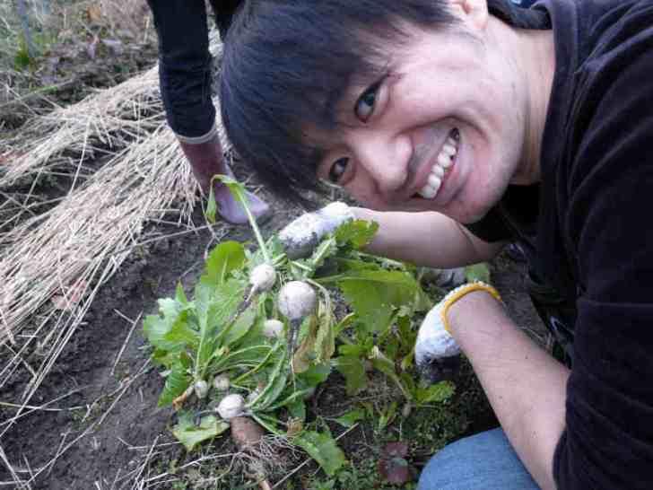 大根やかぶやジャガイモの収穫 (5)
