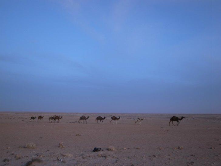 サハラ砂漠自転車旅 (2)