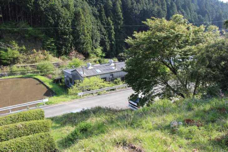鈴木製茶のお茶工場を見学して、茶葉の作り方を聞いてきたよ!(新城市作手田代)