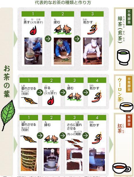 お茶の作り方