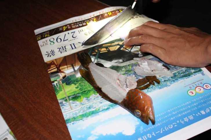 福井で魚突き!80cm弱の真鯛と40cm強の石鯛とキジハタとったどー!! (17)
