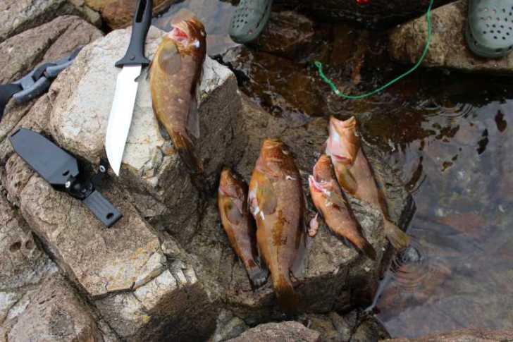 福井で魚突き!80cm弱の真鯛と40cm強の石鯛とキジハタとったどー!! (13)