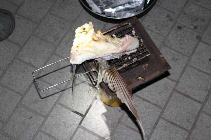 福井で魚突き!80cm弱の真鯛と40cm強の石鯛とキジハタとったどー!! (21)