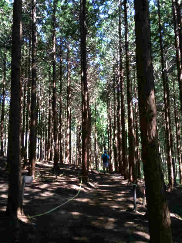 三河高原トレイルランニングレース2014に出場した結果・・・(新城市作手) (8)