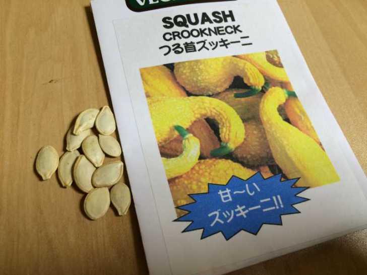 【珍しい野菜栽培】5.珍しい野菜のタネを植えたらネズミに喰われたよ (6)