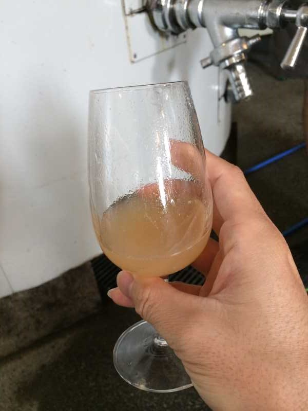 ワインの王様のぶどう品種「ピノ・ノワール」を使う山梨のワイナリーを見学してきたよ! (10)