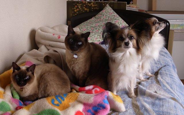 我が家のかわいい犬(パピヨン)と猫(雑種)がラインスタンプになったよ! (1)