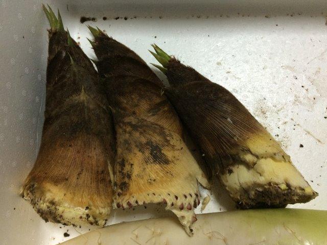 【田舎暮らしの春の旬】タケノコ掘りに、わらび、つくしを採って食べてみた! (4)