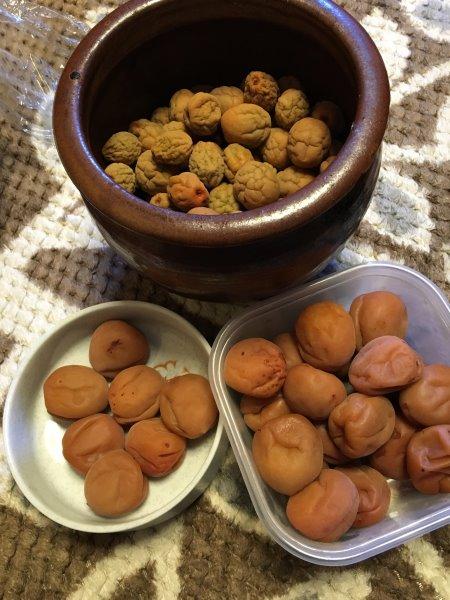 梅干しを食す会 (1)