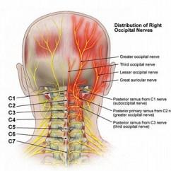 Human Spine Diagram Bones Vertebrae Simple Thermistor Circuit 首の痛み・頭痛・三叉神経痛の治療 |高木整骨院 広島県福山市 | 福山 高木整骨院 手わざと脊椎矯正|広島県福山市