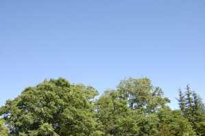 自然葬の日の青空