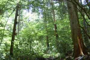 高尾山の豊かな森