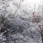 雪の高尾山2