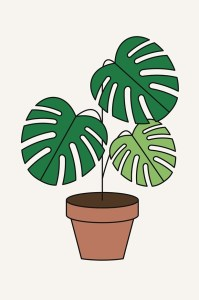 RedFries_la_monstera