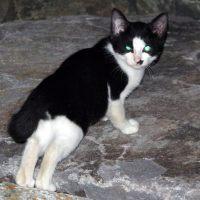 【Photo】城南島海浜公園で夜に猫を撮る。【 #猫 】