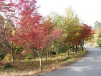 高取山は紅葉のピーク!