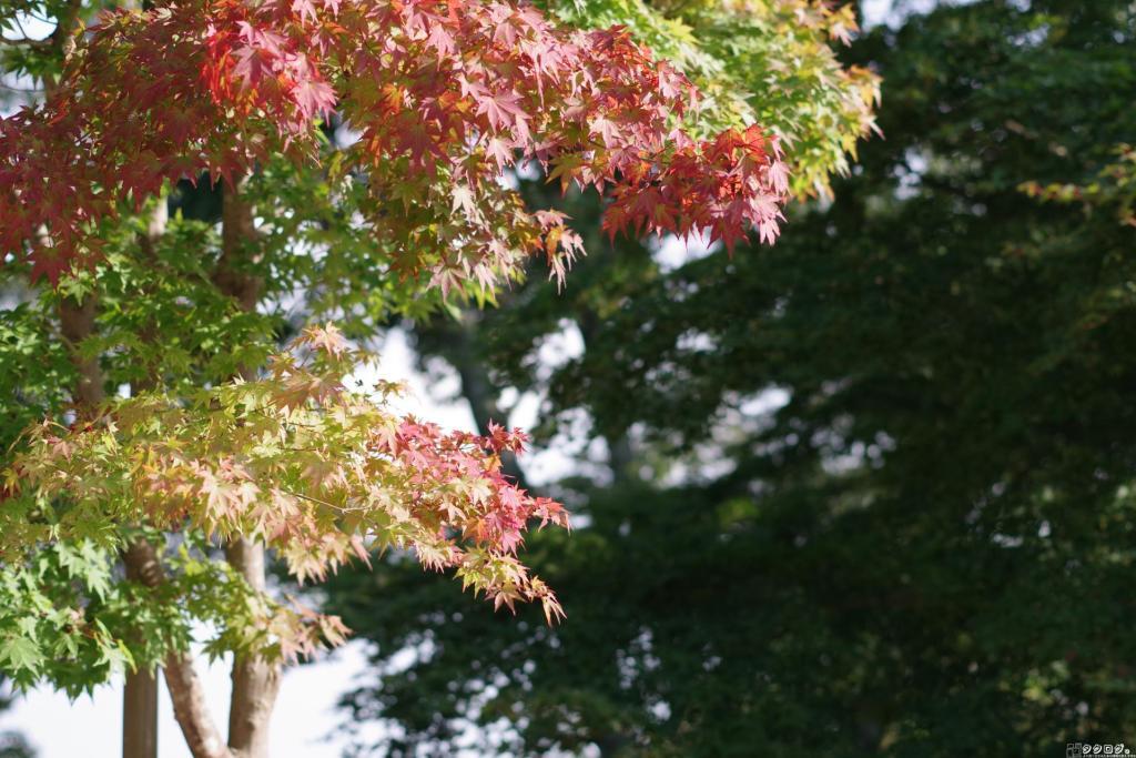高尾山は紅葉しかけ