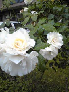 バラシーズン到来