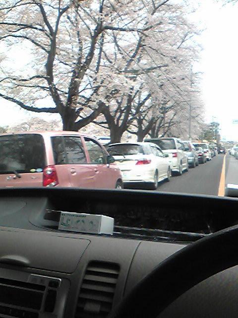 お花見渋滞