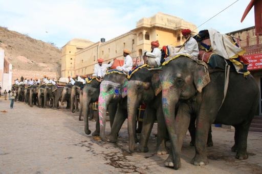 Amber fort... and the poor elephants