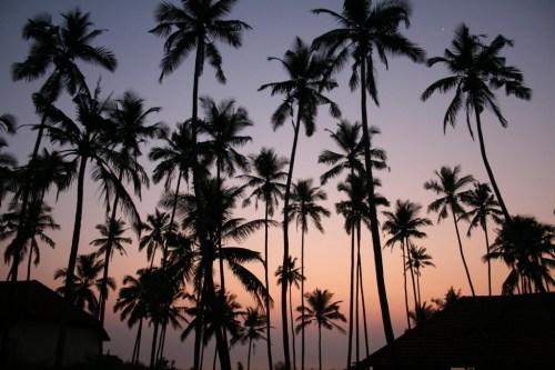 Palm sunset =)