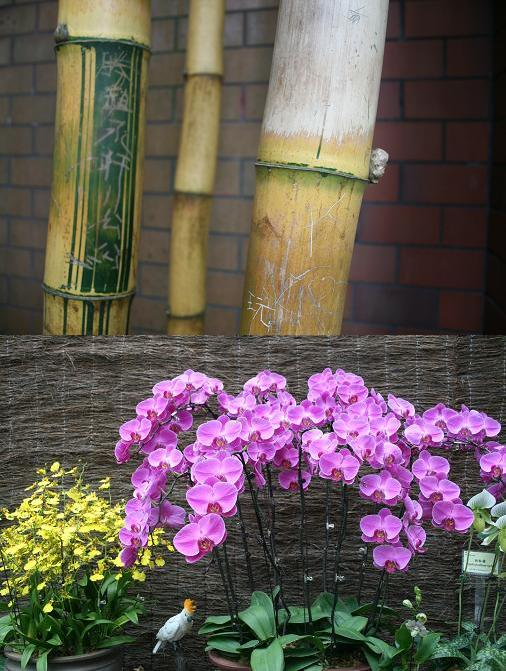 Bamboo and flower