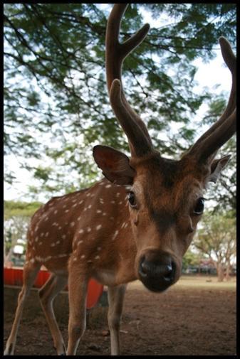 Deer whats wrong ?