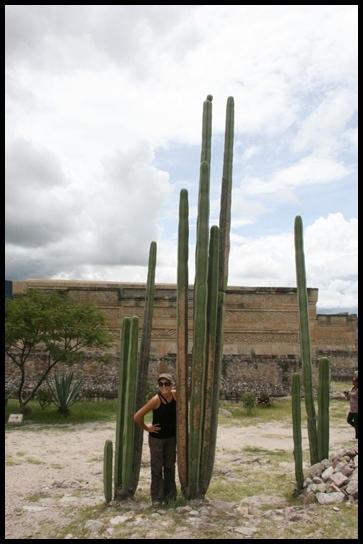 Mitla cactus