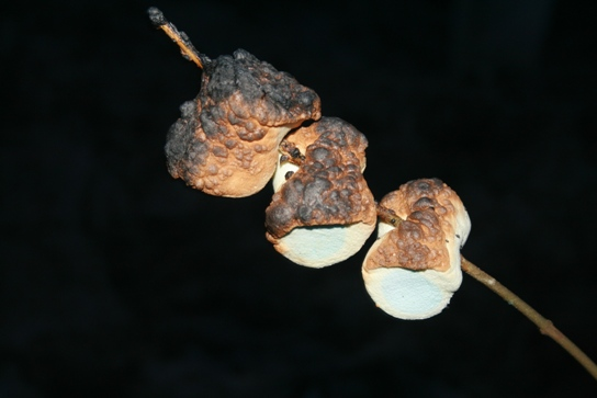 Volcano marshmallow
