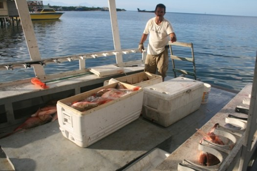 30 Our capitain fish 500kg of snapper