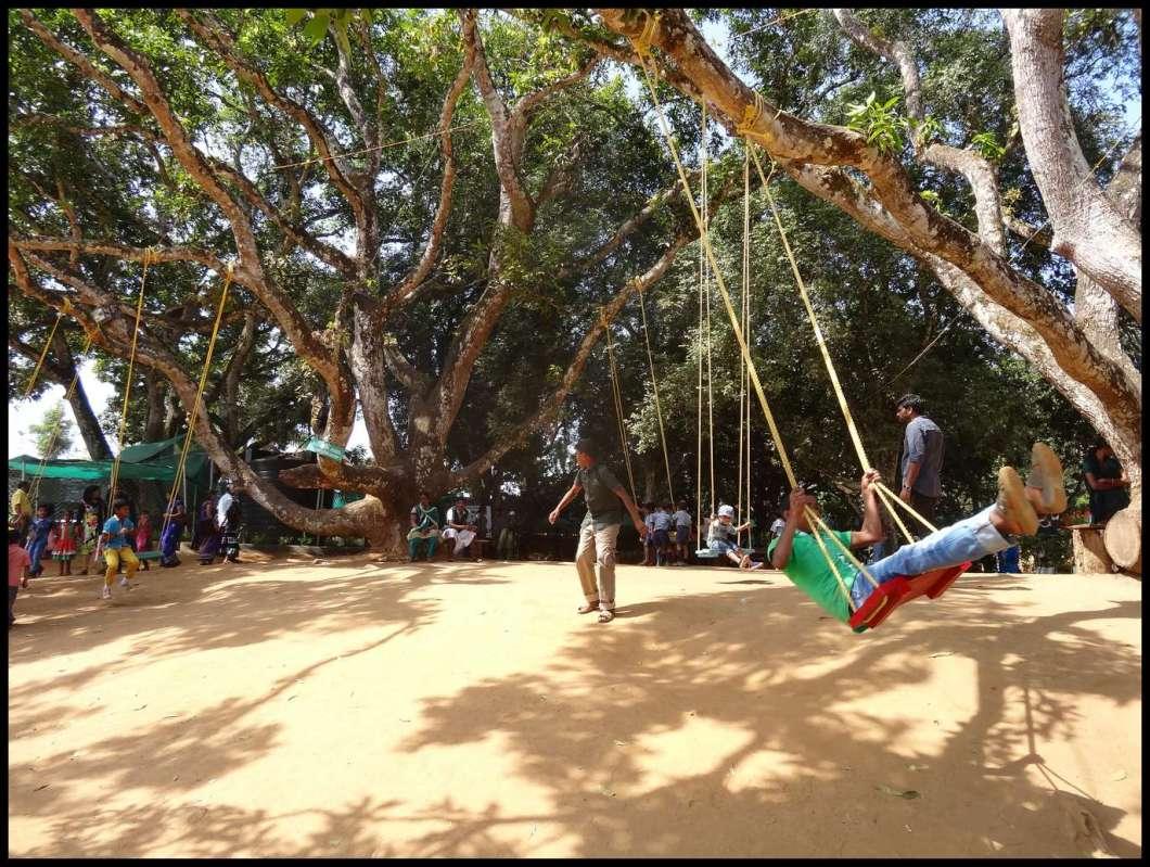 Swing in a big tree