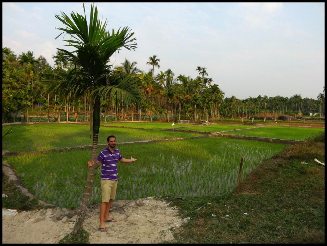trikkaipettta rice field