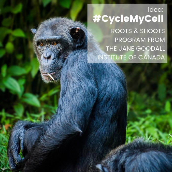 IDEA/OPP: #CycleMyCell – Roots & Shoots Program from the Jane Goodall Institute of Canada