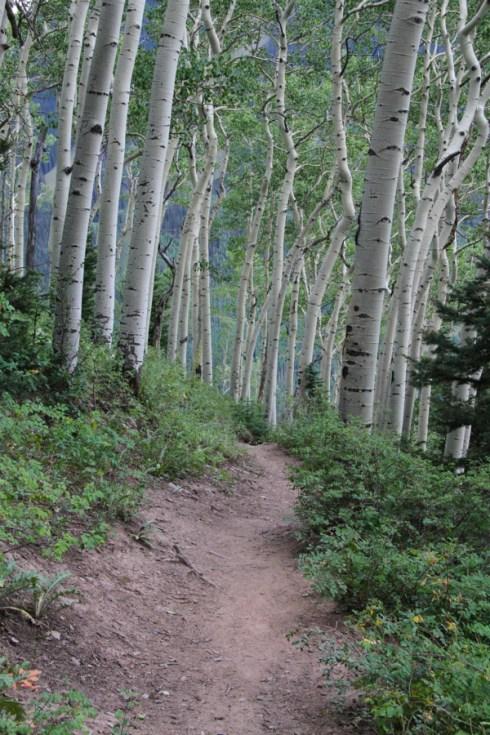 Aspen along the Jud Wiebe Trail