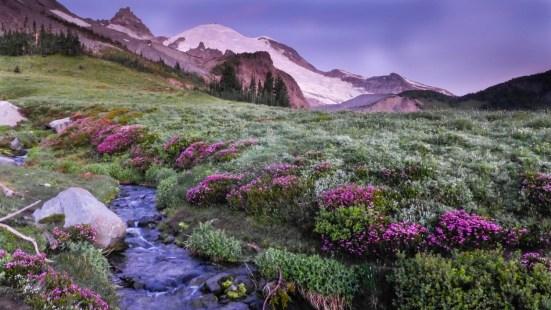 Mount Rainier from Summerland
