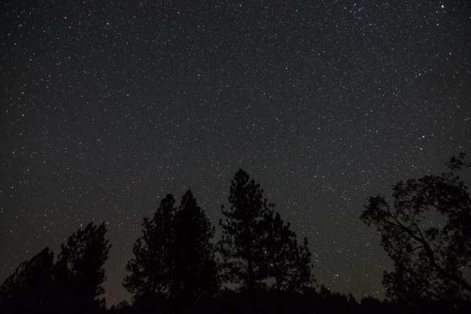 star stars starry night starry sky pine tree silhouette