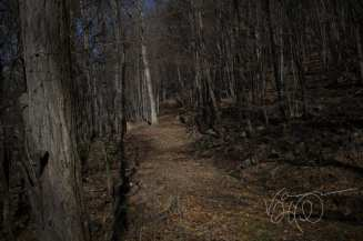 A leafy winter trail into the woods near Jennings Randolph Lake in Maryland