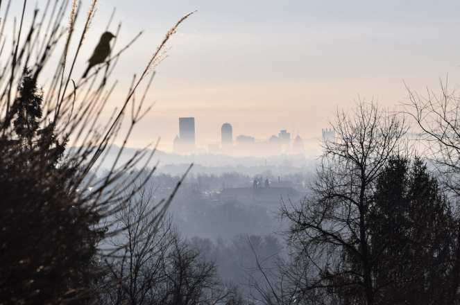A lone finch looks out over the distant Pittsburgh skyline on a foggy winter morning.