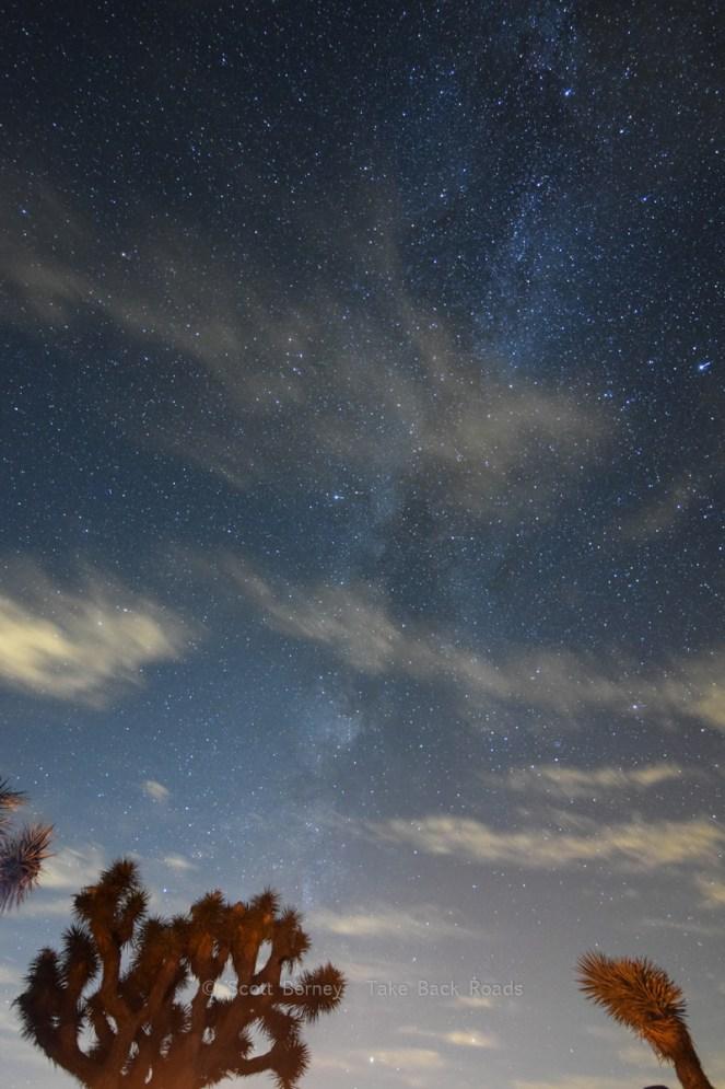 Joshua Tree night sky photo. The Milky Way towers over a couple joshua tree cacti dimly lit by a nearby campfire.