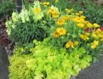 黄色い花の花壇
