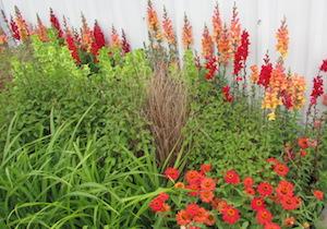赤い花の花壇