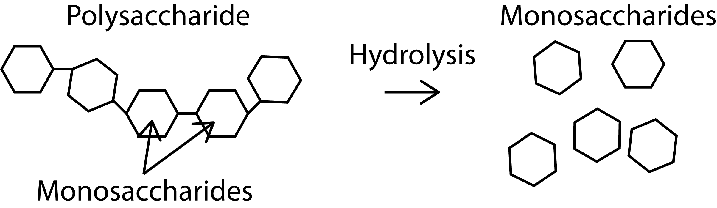What are Polysaccharides
