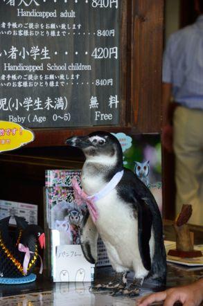 掛川花鳥園 ペンギン
