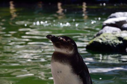 掛川花鳥園 ケープペンギン