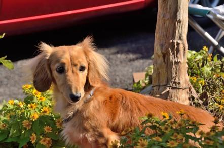 香嵐渓 犬のお留守番