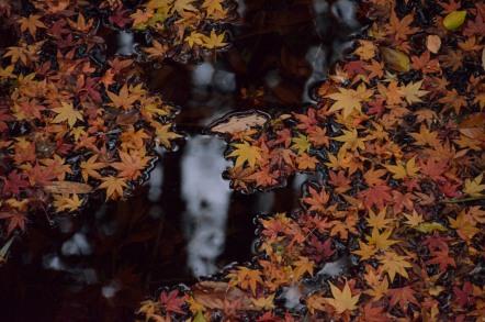 寂光院 紅葉 落ち葉