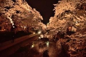 春はやっぱり五条川の桜祭り!ライトアップされた満開の夜桜を愛でるのも良きかな。